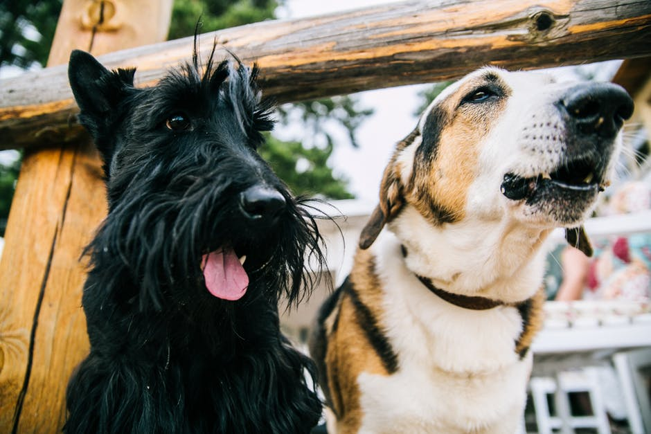 Moción para reclamar un nuevo marco normativo de protección animal en Castilla y León