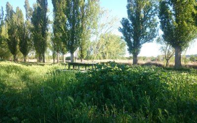 Rescisión del contrato con Vallisoetana de Áreas verdes