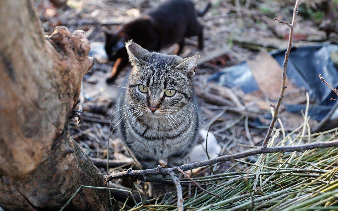 Denunciamos la falta de gestión de las colonias felinas