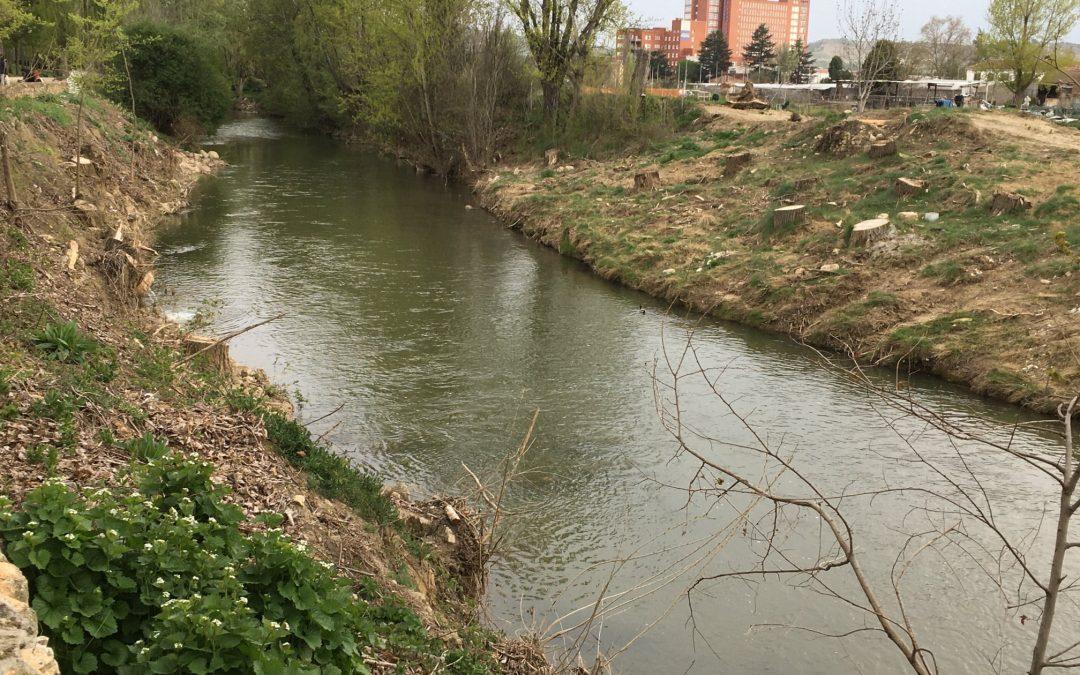 Ganemos Palencia denuncia ante la Junta la tala de árboles en la Ribera del Carrión