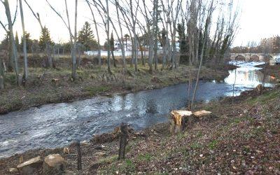 Las talas en la ribera del río y en el Monte  están fuera de la legalidad