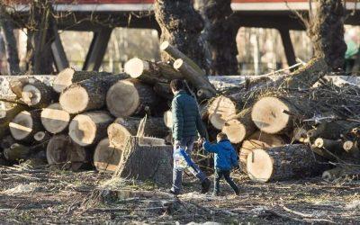 Contra la modificación del PGOU en lo que afecta a los árboles de Palencia