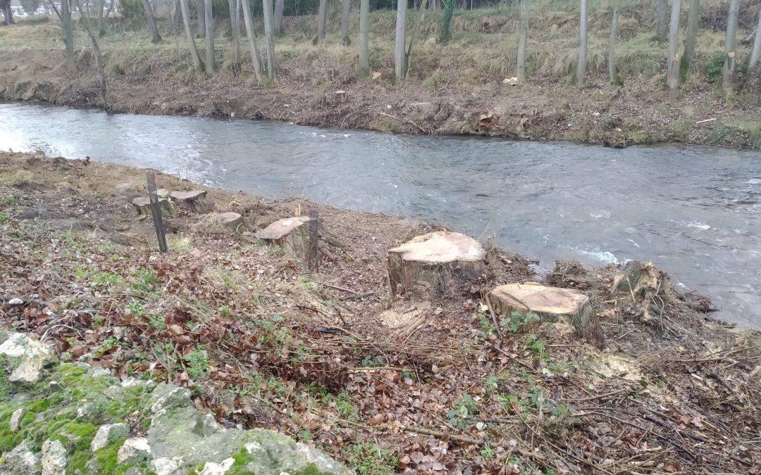 La Plataforma en Defensa del Arbolado critica la falta de información por parte del Ayuntamiento respecto a las talas en la ribera del río Carrión